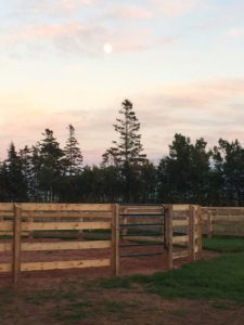 Round Pen - 5 foot fence